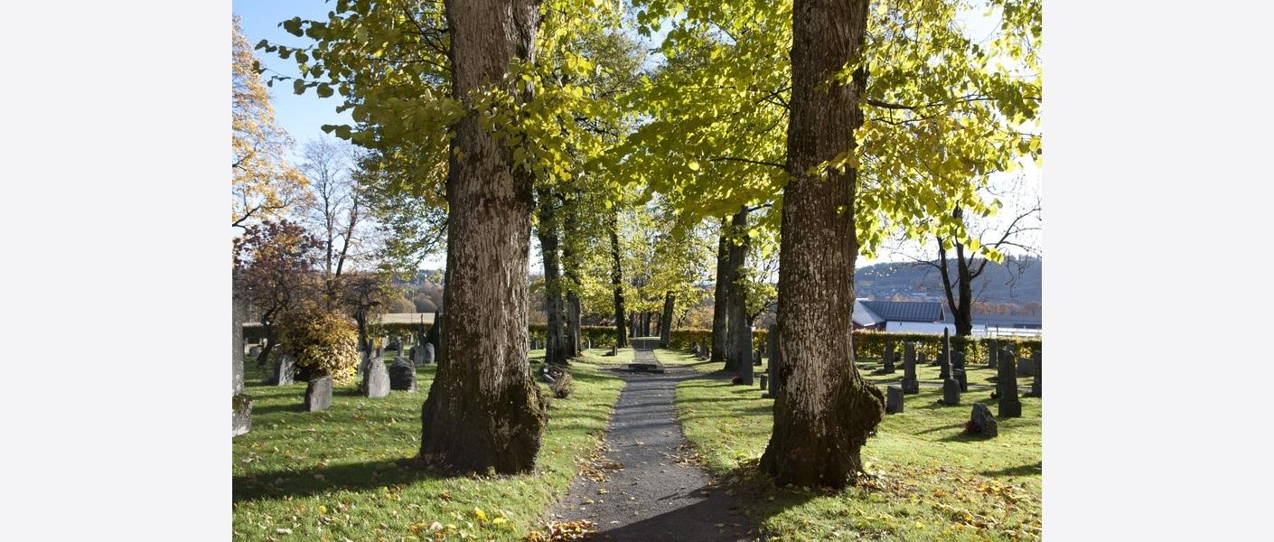 Det foreslås tiltak og strategier for å ivareta trær og busker. Foto: Asplan Viak