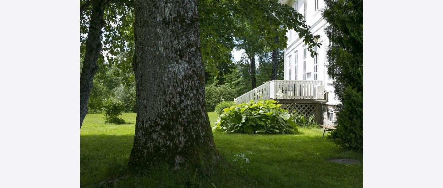 Hagen sommeren 2017. Gamle trær og stauder. Foto: Åse Holte | Asplan Viak