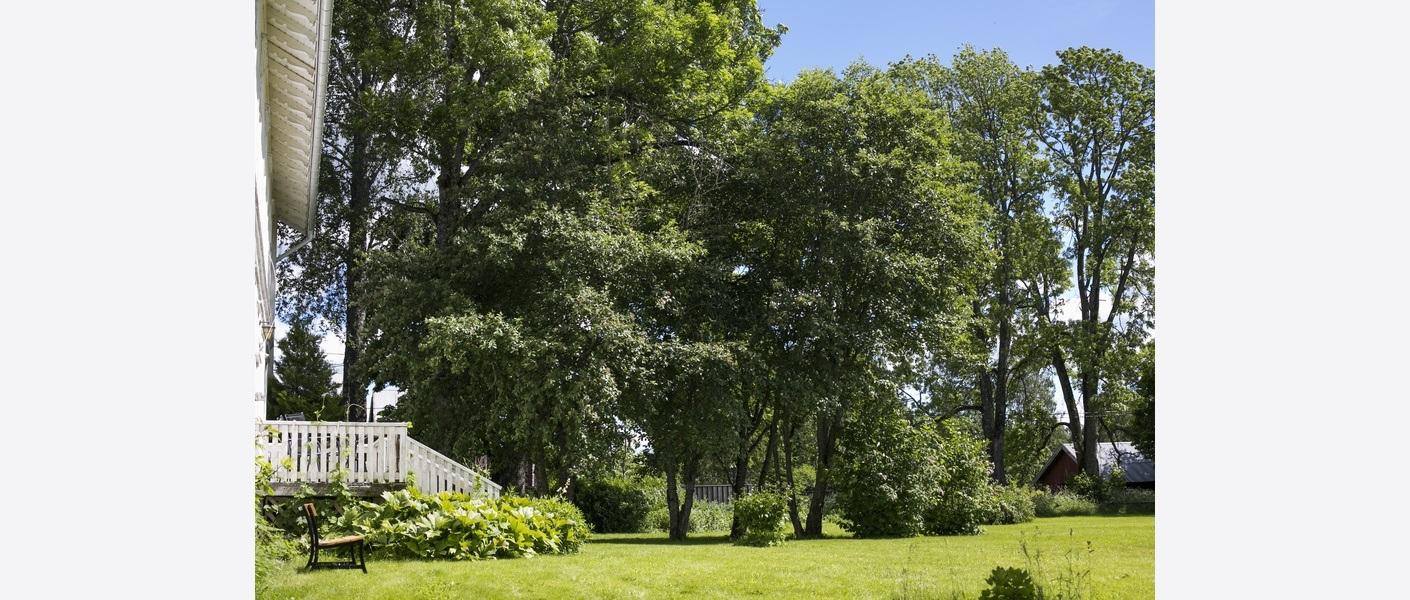 Hagen sommeren 2017. Gamle trær, busker og stauder. Foto: Åse Holte | Asplan Viak