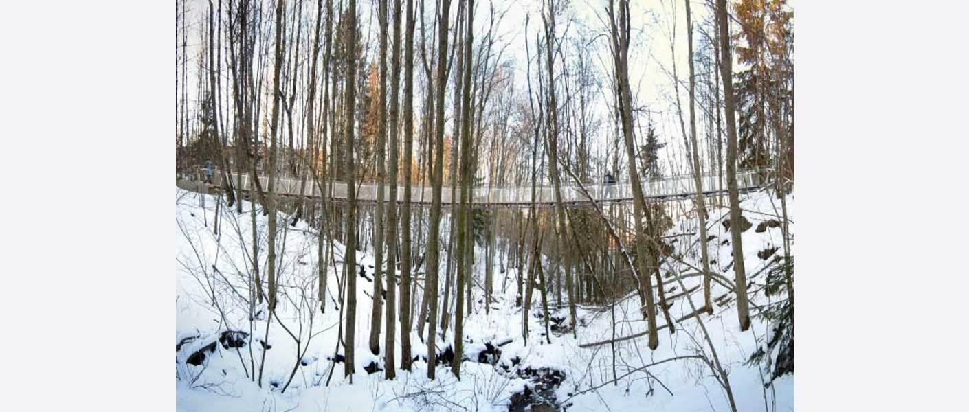 Kryssing av viktig bekkebiotop med hengebro over bekkeravinen - det beskytter landskapet og bekken, samt skaper flotte opplevelser på turen. Foto: Rendering av Dof ingeniører