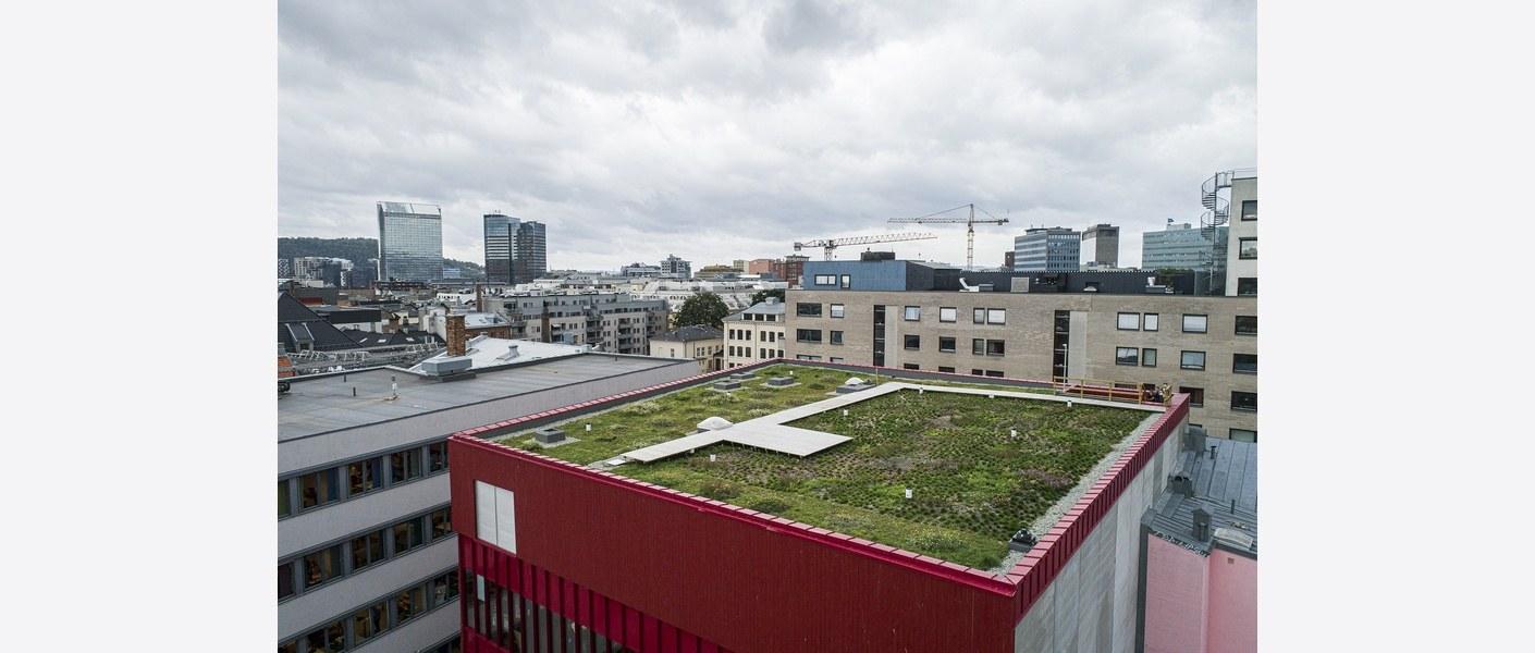 Overvannshåndteringen på Vega Scene er kombinert med et grønt og helt unikt takprosjekt, der man blant annet skal undersøke hvordan Oslofjordens truede plantearter vil overleve i et tøft, urbant miljø som på taket av Vega Scene.Dronefoto: Asplan Viak