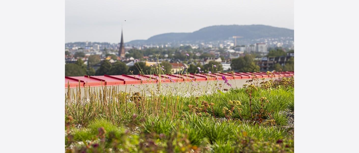 Foto: Åse Holte