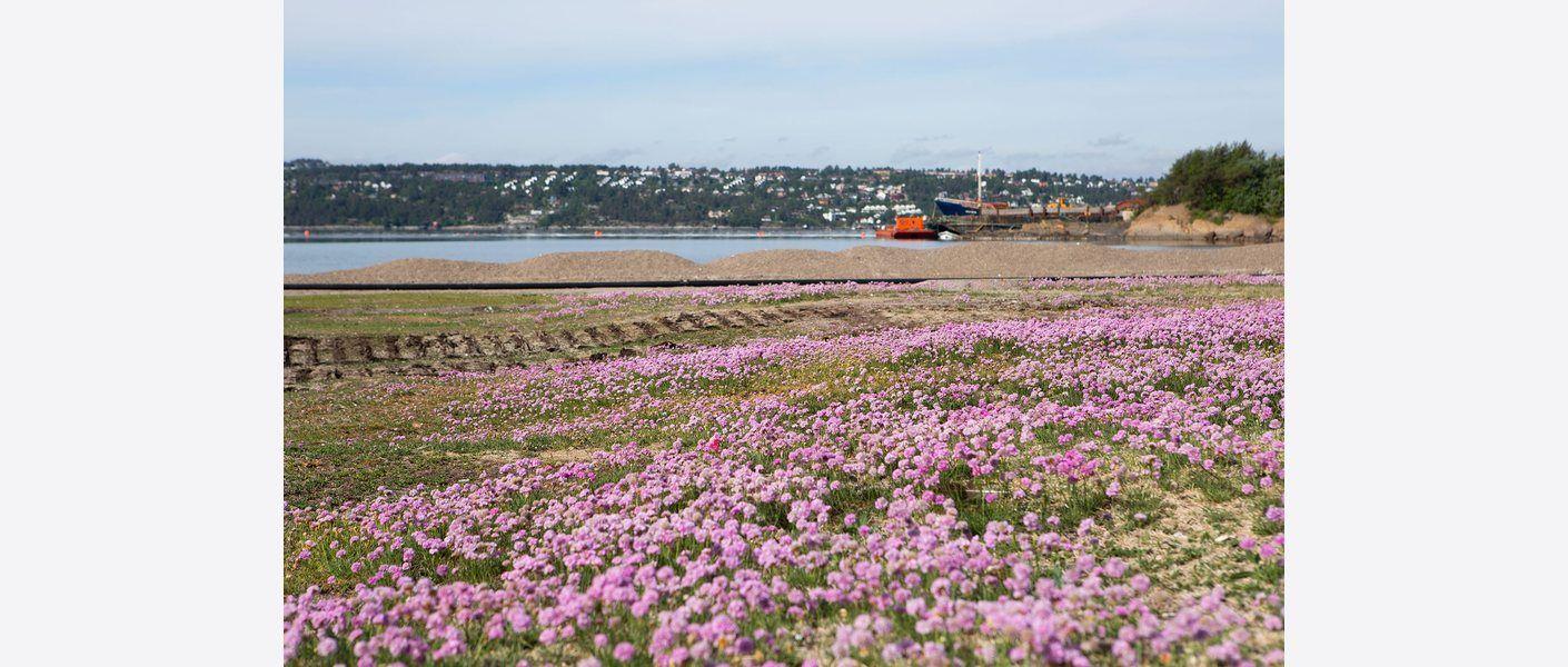 Langøyene har i dag et mangfold av kalkrik kystvegetasjon. Foto: Kirsti Reinsberg Mørch