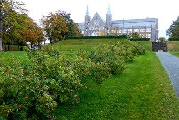 NTNU campusutvikling – Asplan Viak er lommekjent på Gløshaugen