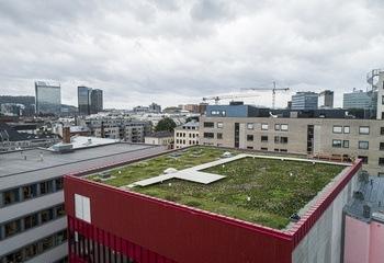 Frokostseminar i Kristiansand: Hvordan løser vi ekstremnedbør og naturmangfold i et bymiljø? /