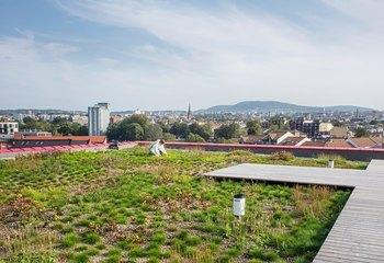 Asplan Viak blir partner i Grønn by / Asplan Viak planlegger grønne byer. Her fra det blågrønne taket som tar unna overvann på Vega scene i Oslo. Foto: Asplan Viak
